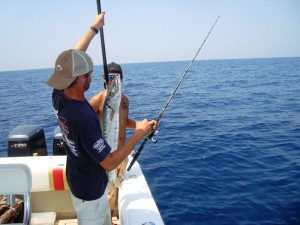 barracuda caught in st simons island