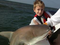 shark caught in st simons island