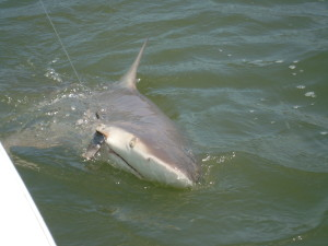 Jekyll Island Shark Fishing Charters